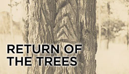 Return of the trees