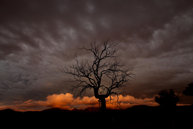 Nick Moir, Riding out the storm – A dead tree silhouetted against a fading storm south-east of Canberra