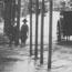 Hansom cabs in street during 1893 flood - Singleton, NSW