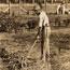 Settler's home, Murrumbidgee Irrigation Area, N.S.W.