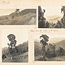 Page 52 - Album 25, 4th November 1900 - 7th April 1901